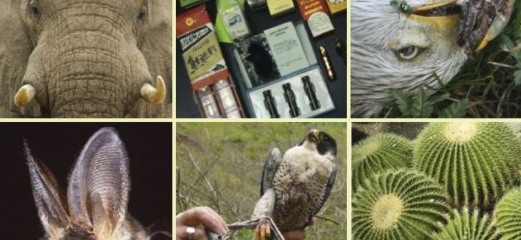 Using forensics in wildlife crime investigation